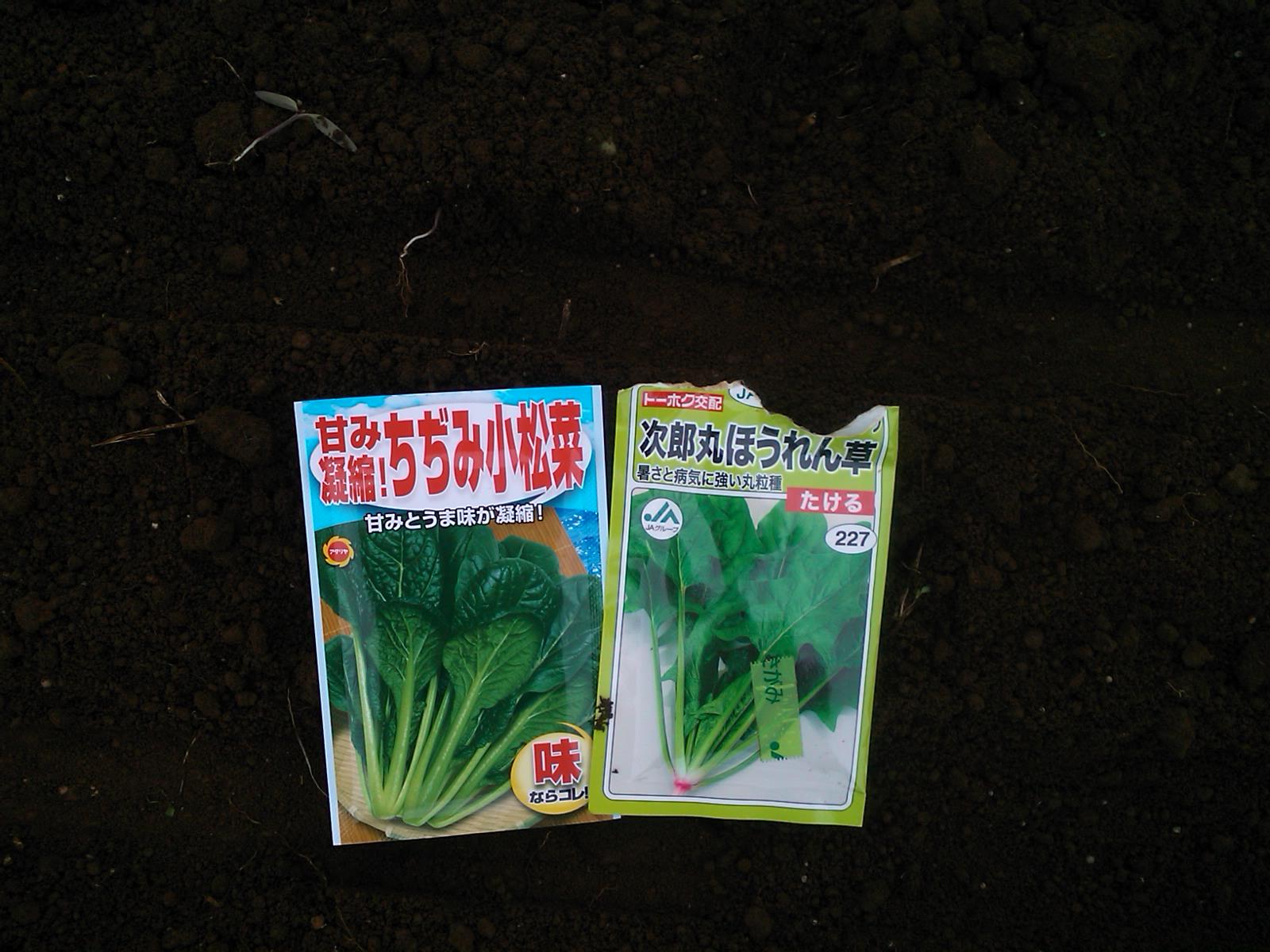 秋野菜作りは、楽しいですか??_b0137932_14563532.jpg