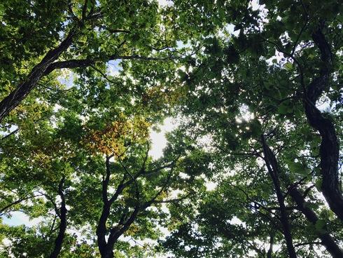 森林の適切な管理の重要性を改めて〜3年前の豪雨被害から@矢巾町南昌山〜_b0199244_9322026.jpg