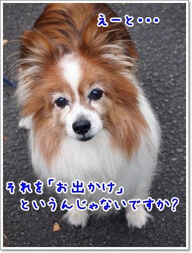 d0013149_00211792.jpg