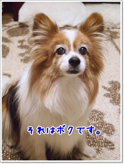 d0013149_23155494.jpg