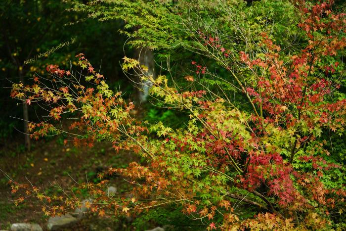 秋の風物詩・・・_a0333661_22545680.jpg