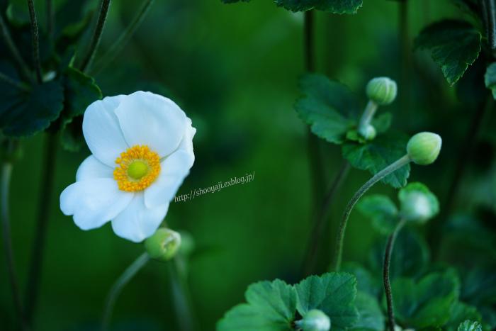 秋の風物詩・・・_a0333661_22551223.jpg