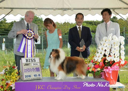 JKC 大阪部会展 パート1_f0126965_16053490.jpg