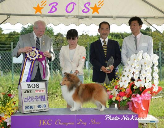 JKC 大阪部会展 パート1_f0126965_16053534.jpg