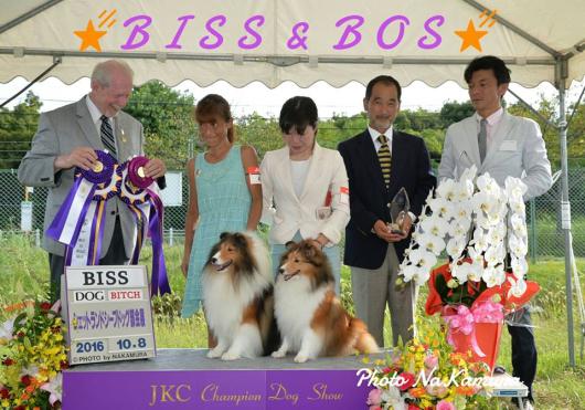 JKC 大阪部会展 パート1_f0126965_16053660.jpg