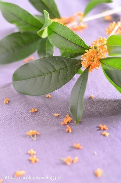 金木犀の練りきり  Homemade Nerikiri    Fragrant Orange & White-colored Olive_d0025294_16593115.jpg