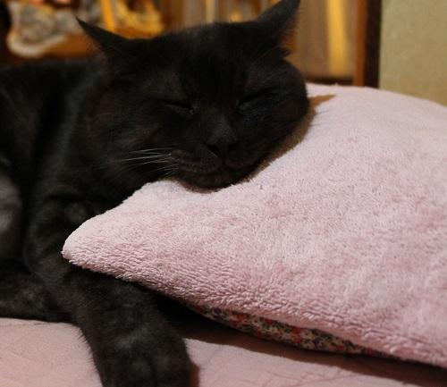 ネコに枕_a0333195_23043977.jpg