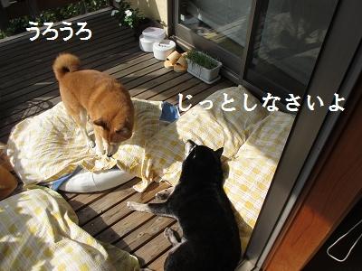 f0068501_15341071.jpg