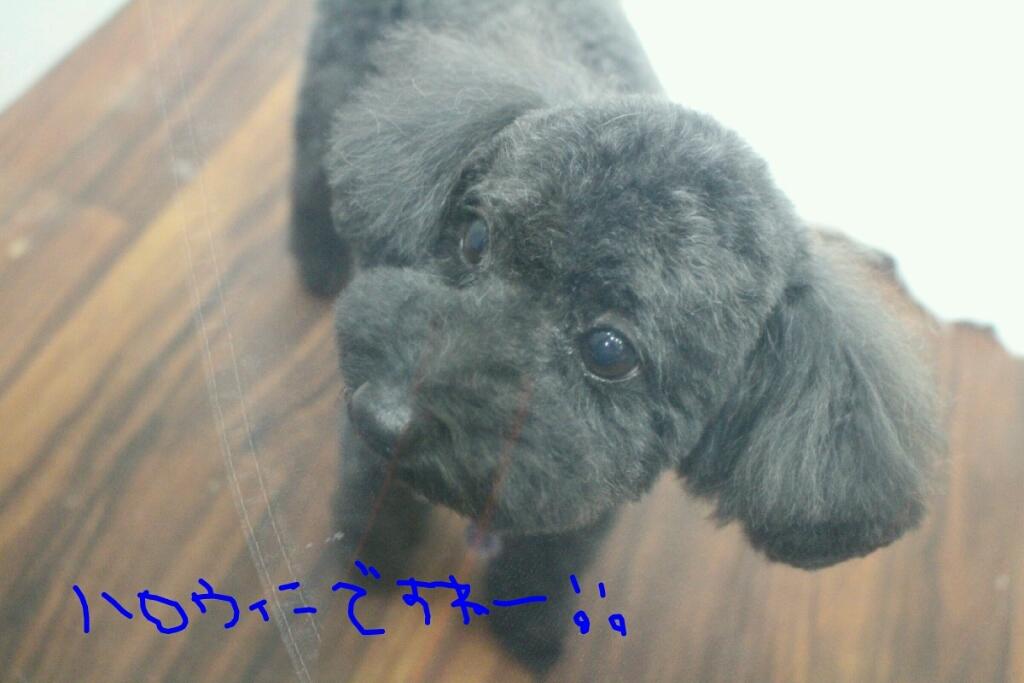 b0130018_20133885.jpg