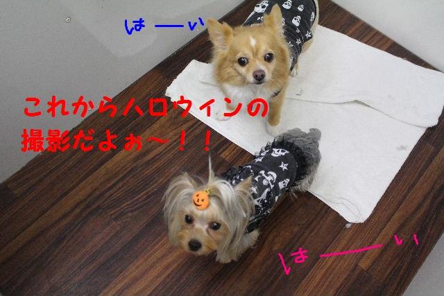 b0130018_723059.jpg