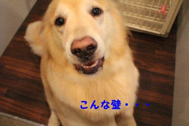 b0130018_73195.jpg
