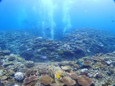 10月12日海が荒れる前にダイビング_c0070933_21414081.jpg