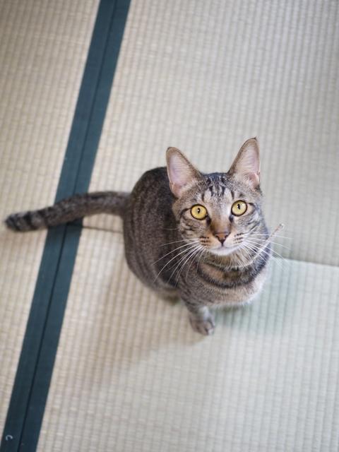 猫のお留守番 ポンシュくんマルチノくんウシオくん編。_a0143140_20185877.jpg