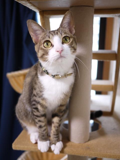 猫のお留守番 ポンシュくんマルチノくんウシオくん編。_a0143140_20242233.jpg