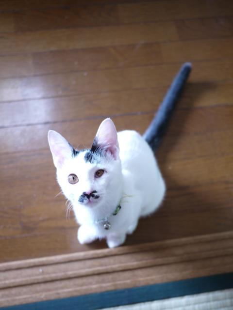 猫のお留守番 ポンシュくんマルチノくんウシオくん編。_a0143140_20264560.jpg