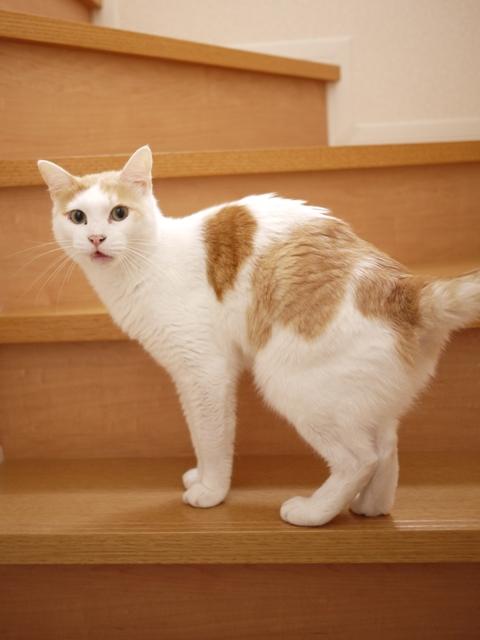 猫のお留守番 開くん咲くん編。_a0143140_20313093.jpg
