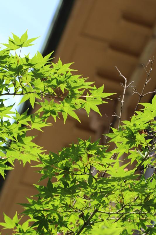 京都芸術センター_b0186148_1272957.jpg