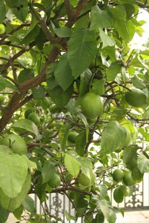 最後のリンゴ_b0214473_2224280.jpg