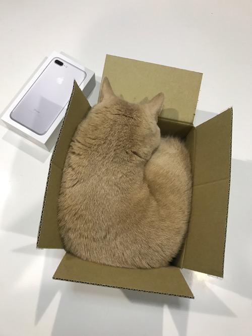 クリキャリ in the BOX_c0108595_20591412.jpg