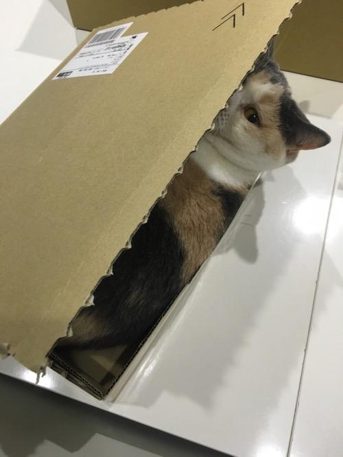 クリキャリ in the BOX_c0108595_2115688.jpg