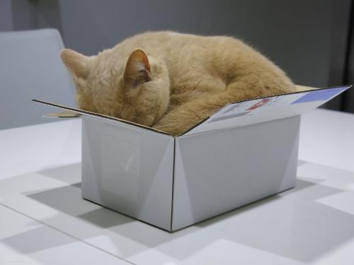 クリキャリ in the BOX_c0108595_2122873.jpg