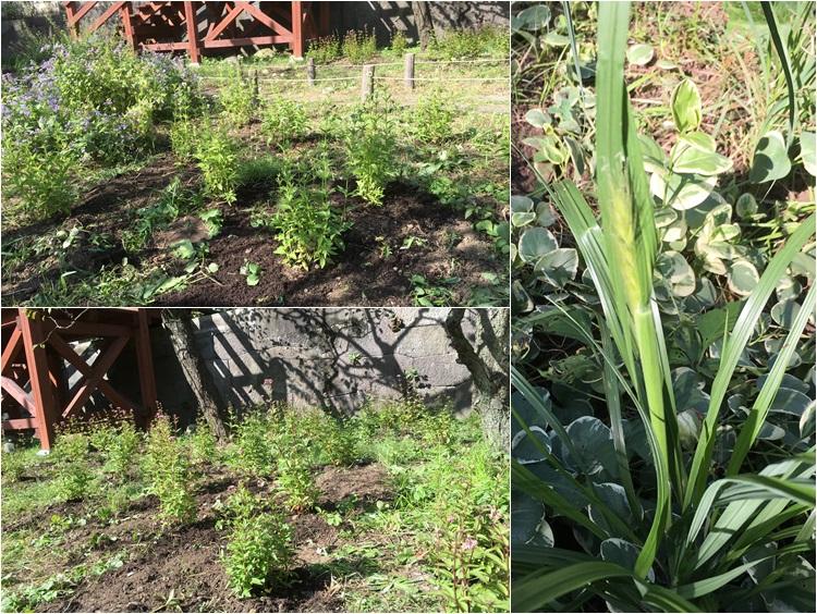 芝公園・10月の 生物多様性ガーデンへ _c0124100_11244893.jpg