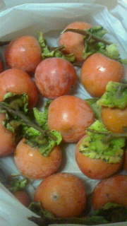 柿がやって来た_c0289116_2113579.jpg