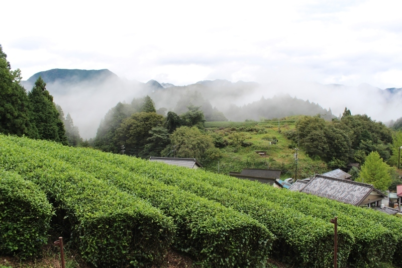 紅茶を追っかけて、設楽_b0220318_05560706.jpg