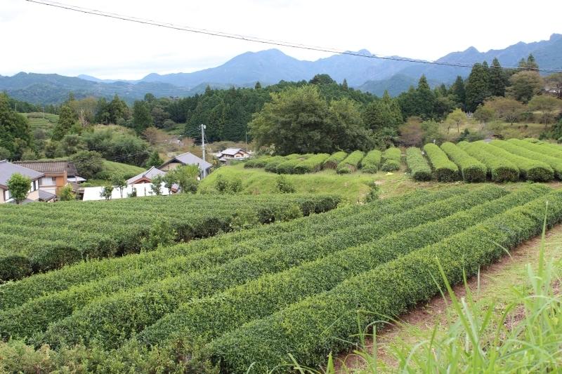 紅茶を追っかけて、設楽_b0220318_05562729.jpg