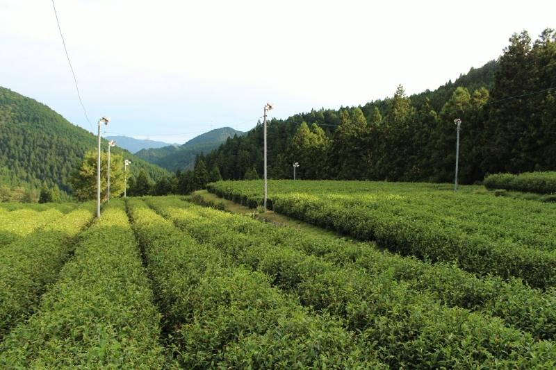 紅茶を追っかけて、設楽_b0220318_05572371.jpg