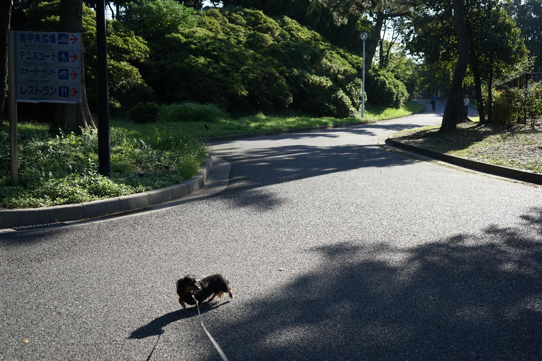 ミミちゃんと服部緑地公園へ_b0069128_1345943.jpg