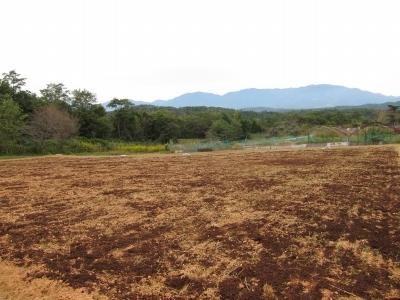 セイタカアワダチソウ 堆肥山がなくなる_d0336530_20502217.jpg
