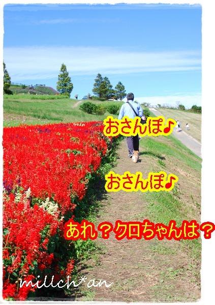 b0115642_8105664.jpg