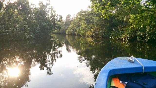 テングザルと蛍 リバークルーズ: どの川に行きますか?_a0132757_17162160.jpg
