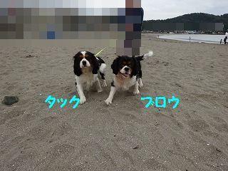 d0353074_16555169.jpg