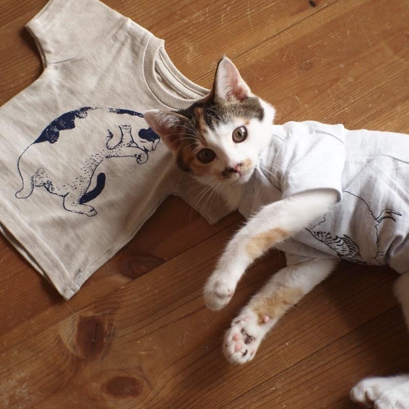 猫用Tシャツ、できました。_c0334395_12042856.jpg