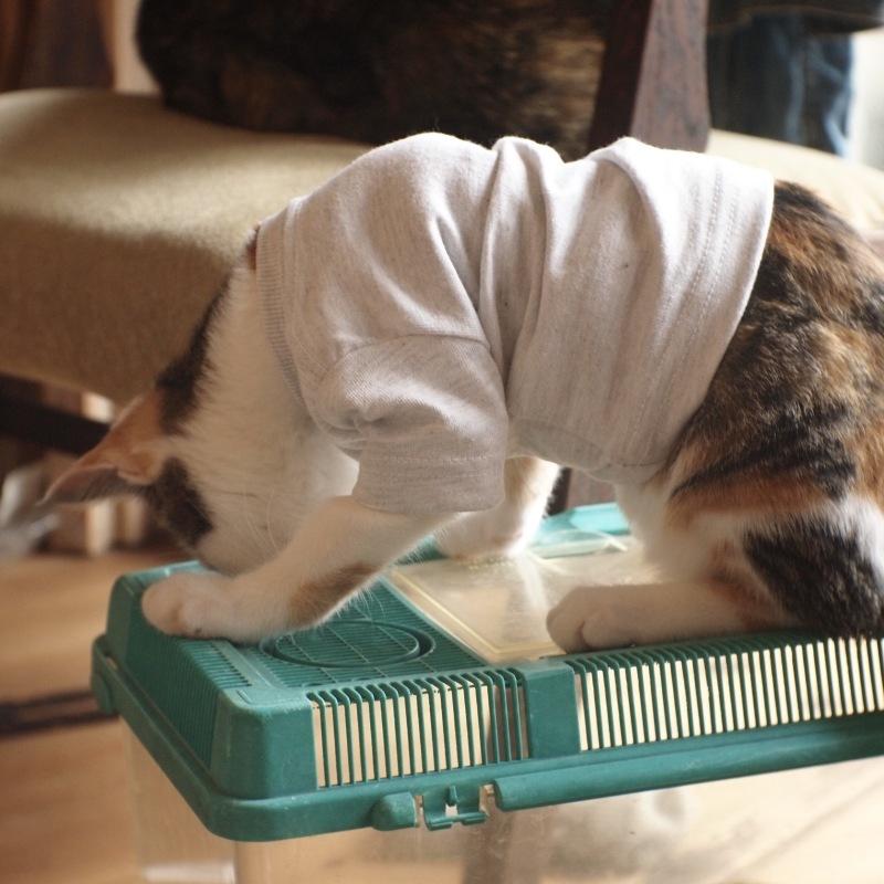 猫用Tシャツ、できました。_c0334395_12043334.jpg