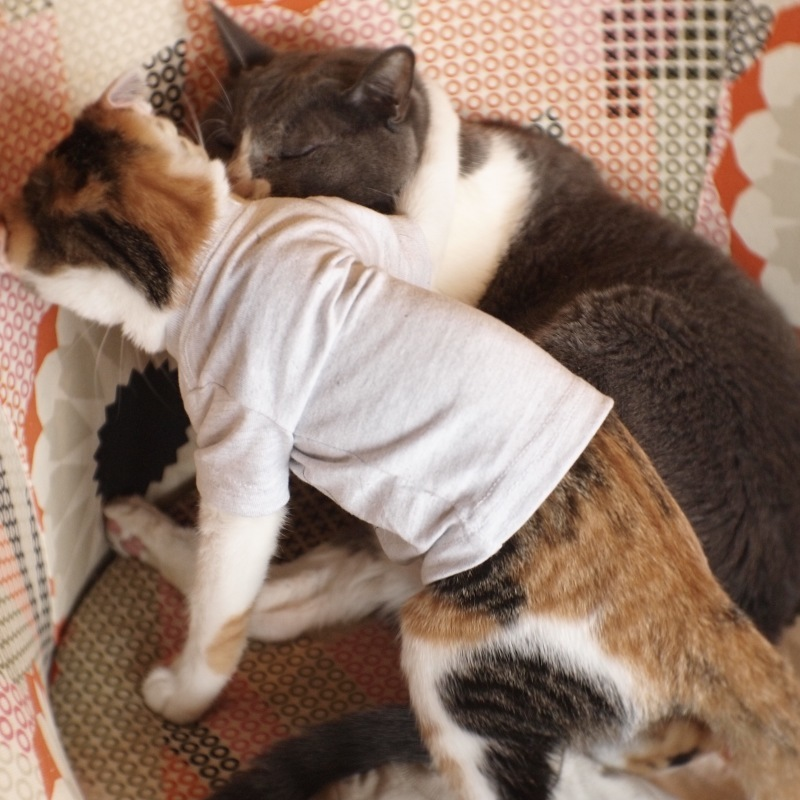 猫用Tシャツ、できました。_c0334395_12132547.jpg