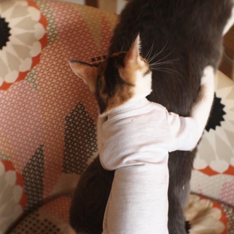 猫用Tシャツ、できました。_c0334395_12133434.jpg
