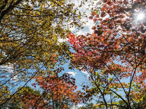 久しぶりに訪れました・・紅葉が始まった「岩内仙峡」_f0276498_23150536.jpg