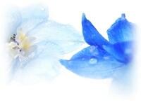 アロマセラピー体験講座のご案内_c0076939_07550816.jpg