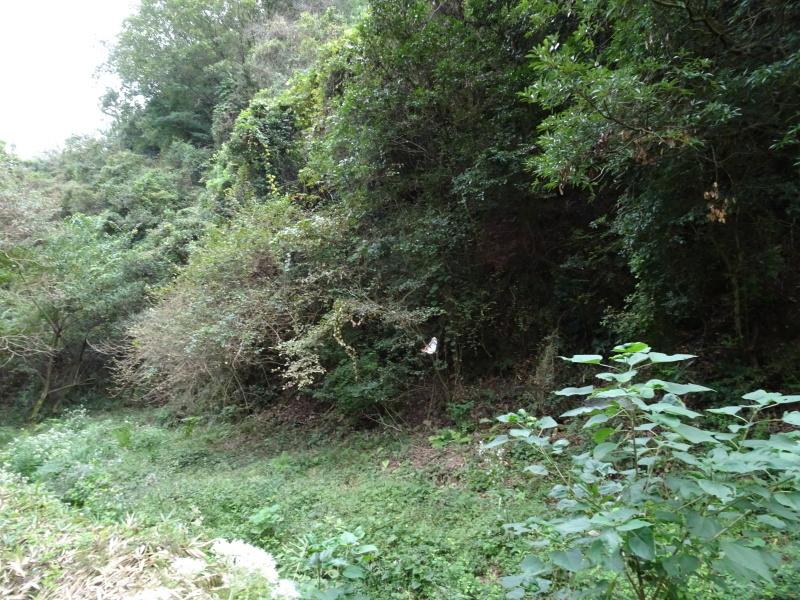 今日もアサギマダラはやって来た・・・孝子の森  by  (TATE-misaki)_c0108460_21560439.jpg