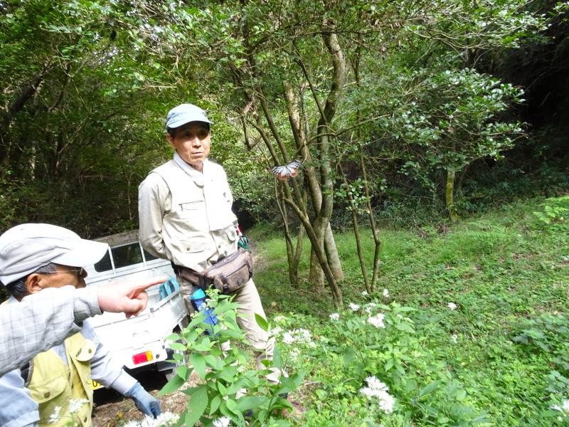 今日もアサギマダラはやって来た・・・孝子の森  by  (TATE-misaki)_c0108460_21561492.jpg