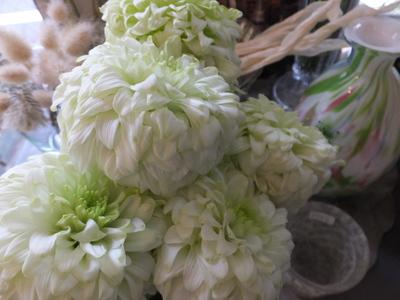 オークリーフ(秋桜)_f0049672_1815231.jpg