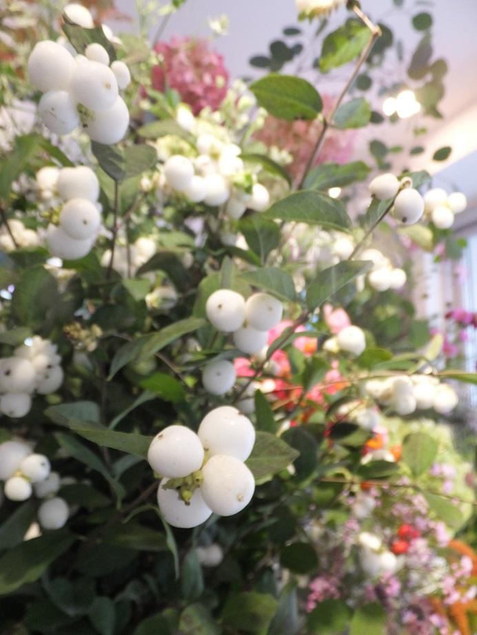 オークリーフ(秋桜)_f0049672_18174418.jpg