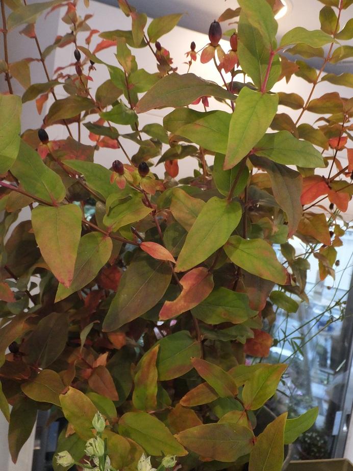 オークリーフ(秋桜)_f0049672_18182265.jpg