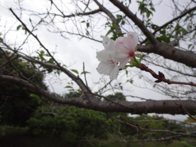 富浜緑地、ゴルフ場 10月の花やみどりの紹介_d0338682_14493129.jpg