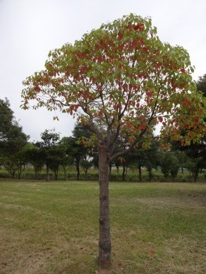 富浜緑地、ゴルフ場 10月の花やみどりの紹介_d0338682_14584132.jpg