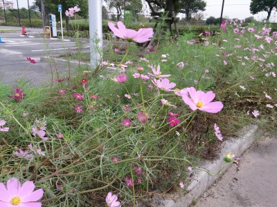 富浜緑地、ゴルフ場 10月の花やみどりの紹介_d0338682_16103390.jpg