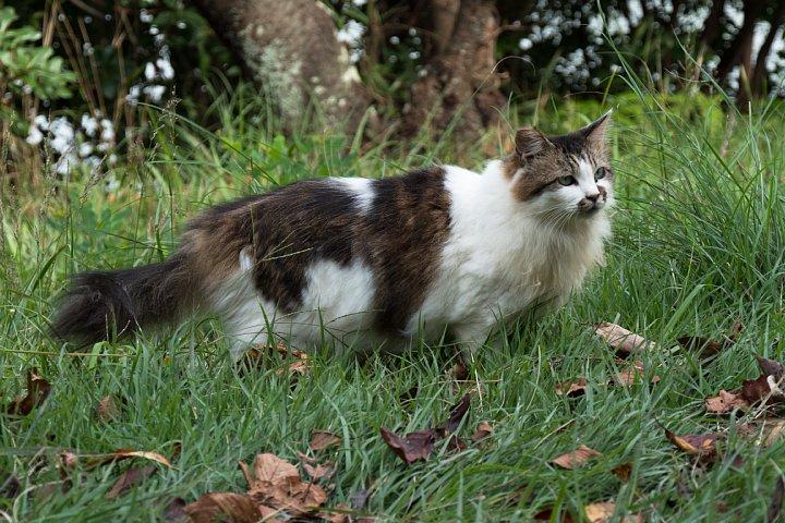 ようやく訪れた秋を愛でる桜猫たち_d0353489_22102611.jpg